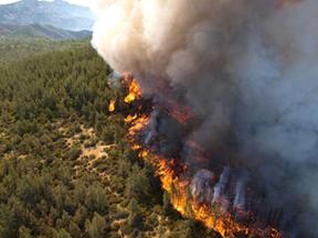 Pożar lasu zdjęcie